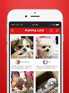 반려동물 쇼셜 네트워크 APP Puppia Lif